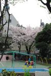 sakura_01.jpg